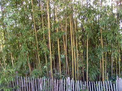 Can You Use Bamboo To Make A Small Retaining Wall GreenAnswers